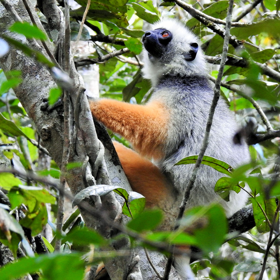 Discover Madagascar with Leon Varley Walking Safaris